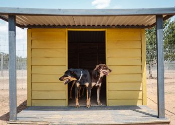 Heathcote Boarding Kennels
